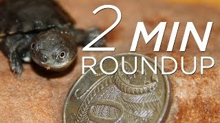 Tiny turtles, polar bear cams & a huge ivory bust