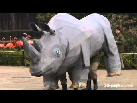 Police scrambled to deal with escaped papier mâché rhino a