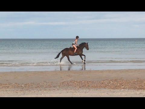 Beach Riding & Macclesfield Show 2017   Vlog   Hannah Lucy
