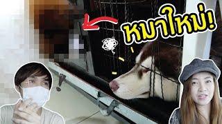 ลูกหมาใหม่-แฟรงค์กับฟูจิจะมีปฏิกิริยายังไง