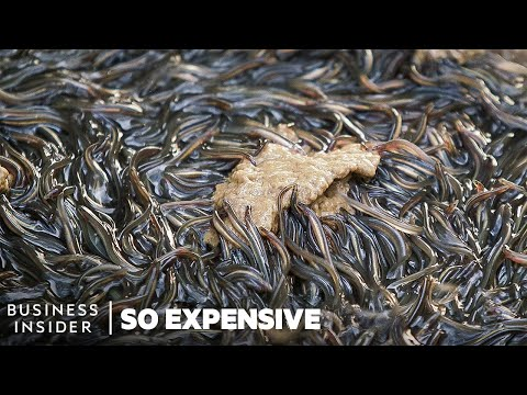 Why Japanese Eel Is So Expensive | So Expensive