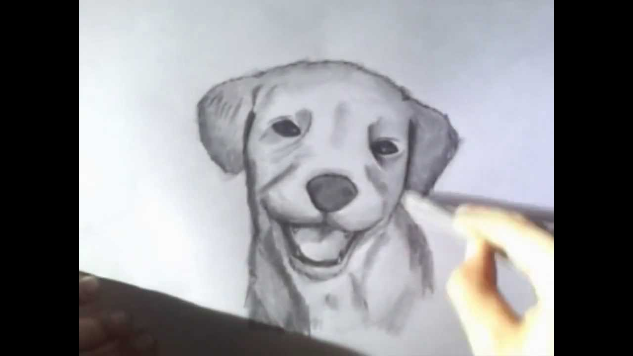 Como Dibujar Un Perro A Lapiz Youtube