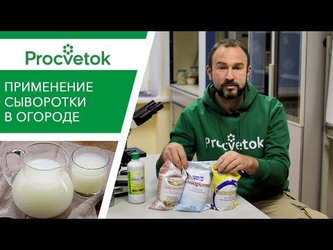 Что будет, если подкармливать растения молочной сывороткой?