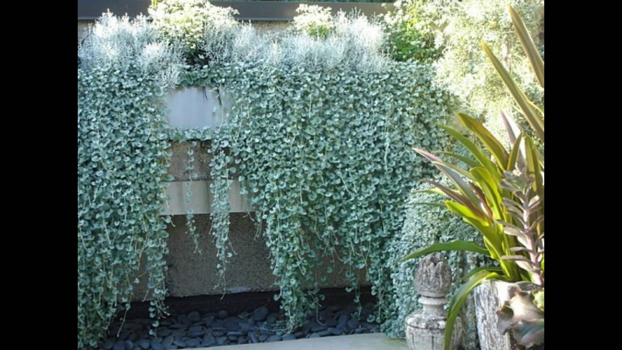 Plantas de exterior resistentes las m s f ciles de - Plantas verdes exterior ...