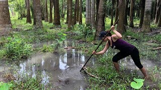 Unbelievable Girl Spearfishing vs. Giant Snakehead In the Forest