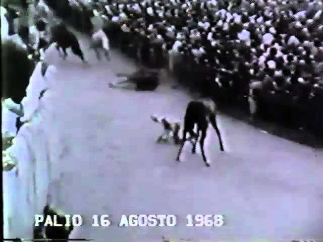 Palio 16 agosto 1968