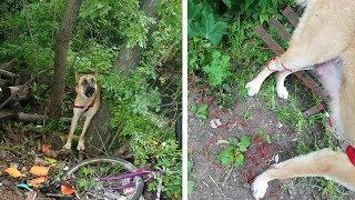 Собака оставлена на привязи в лесу, затем неравнодушный человек обнаруживает нечто ужасное