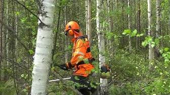 Ennakkoraivauksella kannattavuutta metsänhoitoon.