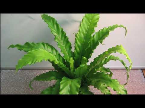 ТОП 20 Теневыносливые растения для дома