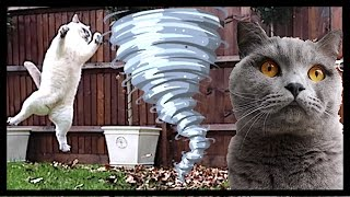 PLAYFUL CATS vs STORM!