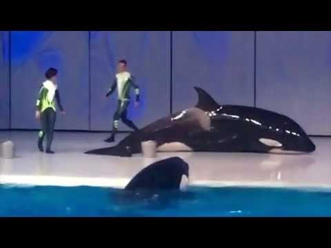 Moskvarium's 3 Orcas Displaying Concerning Behavior