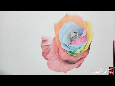 Vẽ hoa hồng với bút chì màu