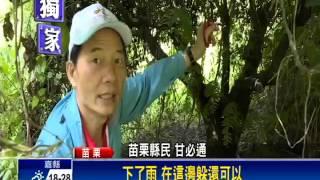 「植物殺手」蔓澤蘭 苗栗縣氾濫成災-民視新聞