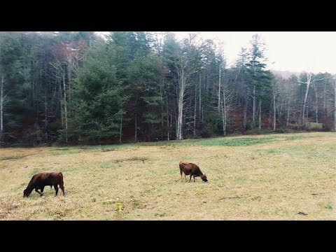 Easy grazing system for small scale farmers