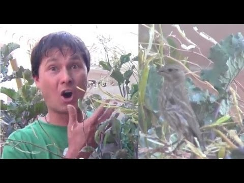 Simple Way to Protect Vegetables in Your Garden from Birds