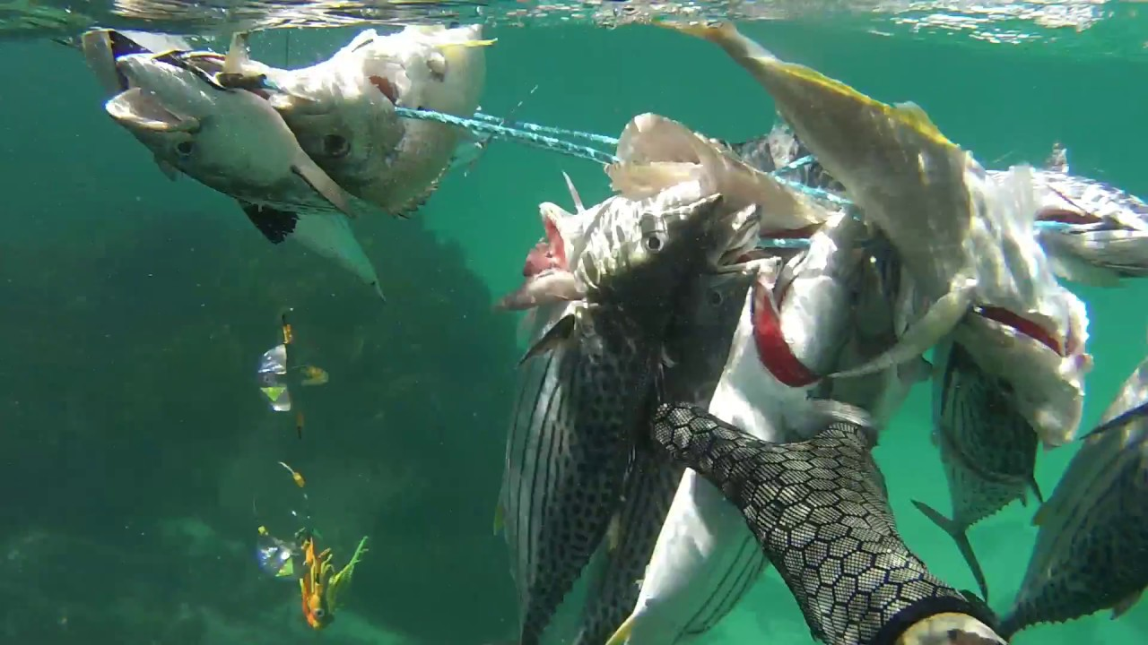Spearfishing Newcastle NSW - vol 1