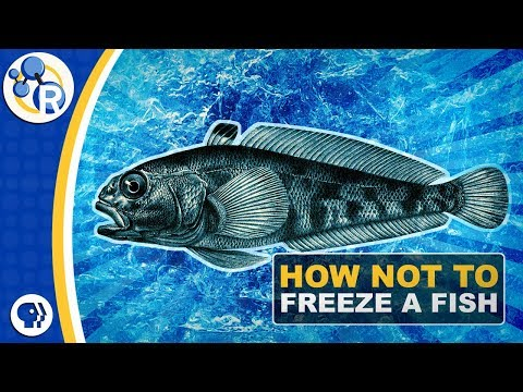 Why Don't Antarctic Fish Freeze To Death?