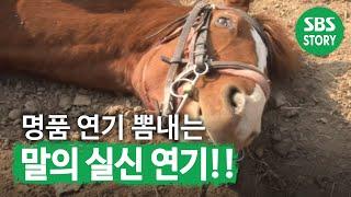 실신 연기의 대가 진강이 @TV동물농장 141109