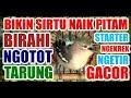 Starter Terapi Agar Sirtu Cipoh Naik Birahi Ngetir Gacor Ngotot Tarung Mental Baja  Mp3 - Mp4 Download