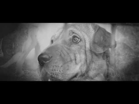 Jam Balaya - Az út szélén közr.Vészk'Járat & Linda (Official Music Video) mp3 letöltés