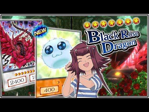 BLACK ROSE DRAGON NUKE! Best Build w/ SPORE! AniMEME but GOOD! [Yu-Gi-Oh! Duel Links] thumbnail