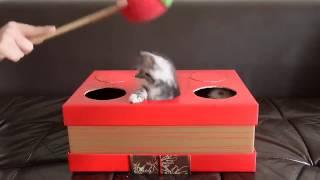 超可愛跟小貓玩打地鼠遊戲