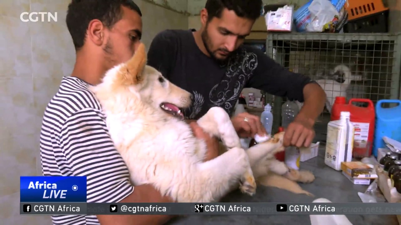 Cairo rescue centre cares for stray, injured dogs