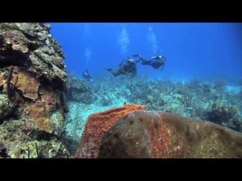 Bahamas Dive Packages at Stella Maris Resort