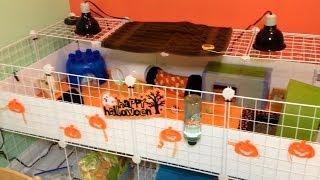 October Hedgehog Cage Tour