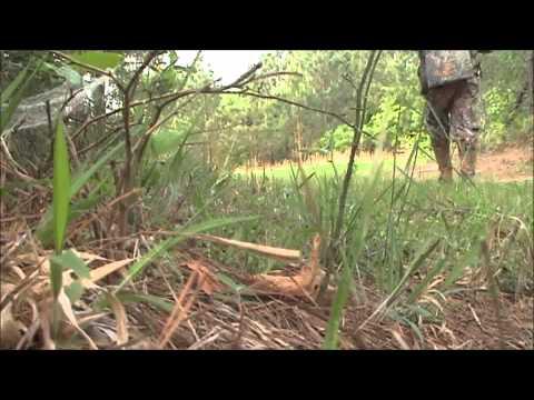 Tennessee Crossbow Turkey Hunt