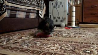 Фильм про кошку Мусю 2