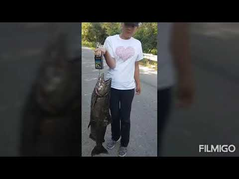 Bow Fishing For Salmon In Port Hope Ontario 2020