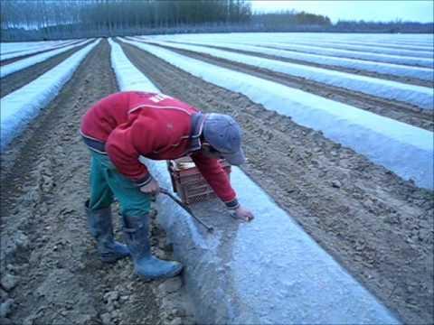 Video agrivaloire minitunnel ash - Comment planter des asperges ...