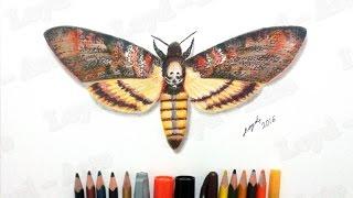 Dibujando una Polilla de la Muerte o Esfinge de la Calavera (Acherontia Atropos) en Tecnica Mixta