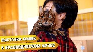 12 09 2018   Выставка кошек в Краеведческом музее