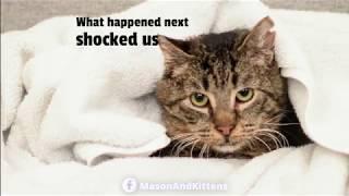 kittens-give-sick-grandpa-cat-a-reason-to-live-tinykittens-com