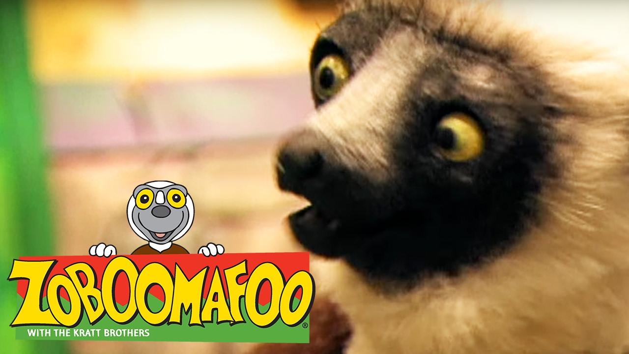 🐒 Zoboomafoo 🐒 134 | Water Creatures - Full Episode | Kids TV Shows