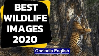 Best wildlife photographers 2020 | Stunning wildlife images | Oneindia News