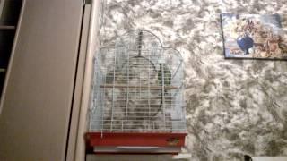 Александрийский попугай Гринни: Турист, где мои чемоданы 1 год и 2 месяца(, 2016-06-08T16:10:56.000Z)