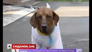 Чи порушують закон господарі собак без повідків