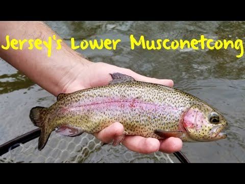 Trout Fishing New Jersey's Lower Musconetcong River