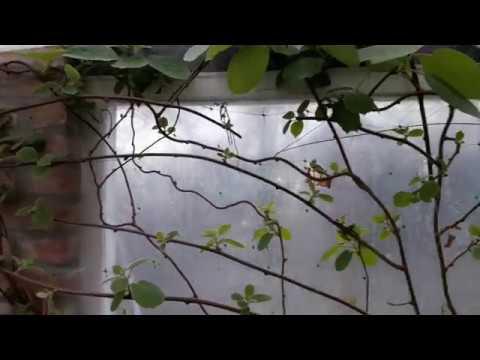 Выращивание киви из семян. Результат)))
