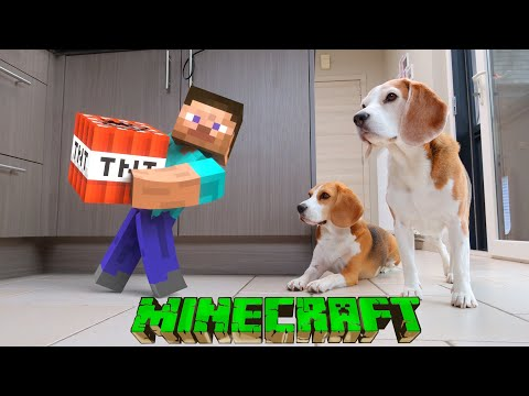 Minecraft in REAL LIFE vs DOGS Compilation!