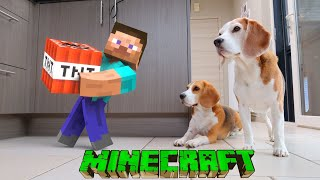 Minecraft Guy tries to Blow up my Dogs! Real Life Animation