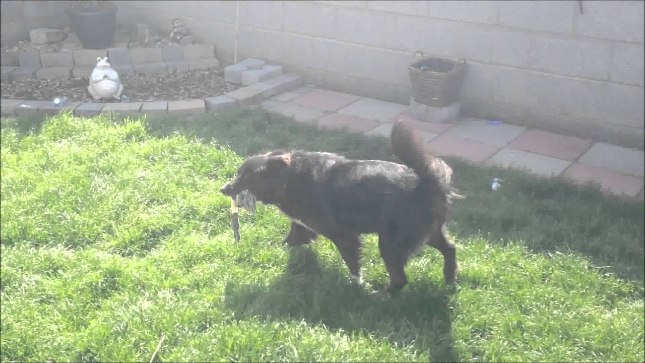 Dog Bark Suppressor