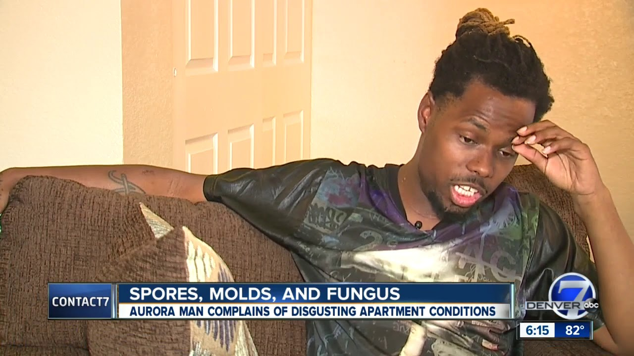 Denver, Colorado: Black Finds Mushrooms Growing Out of His Carpet