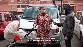 Жестокое убийство: в Одессе нетрезвый хозяин выбросил собаку с 7-го этажа
