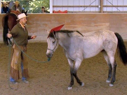 """Pferd und """"Flüsterer"""""""