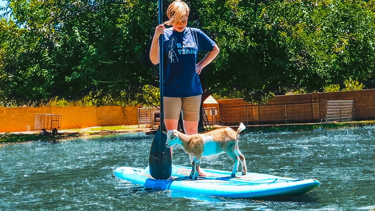 We're so bored we're PADDLE BOARDING with our GOATS 🌊