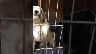 出して出してしです 全国優良ブリーダーの子犬紹介サイト『みんなのブリーダー』 https://www.min-breeder.com/